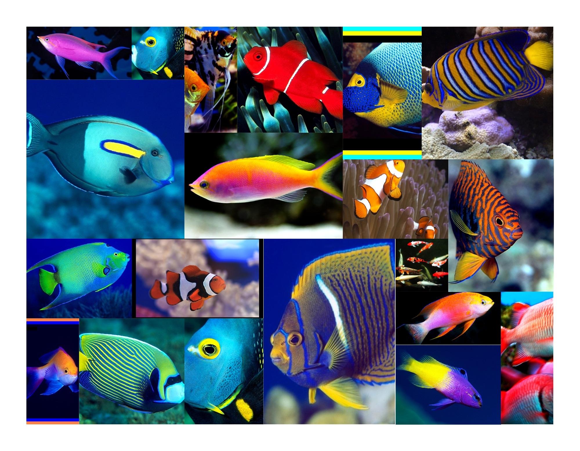 Scuba treasuretrove for Colorful fish pictures